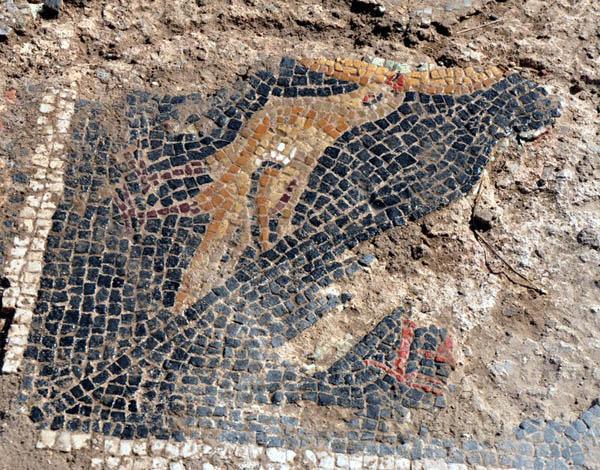 Buğday tarlasında Roma mozaiği bulundu (1)