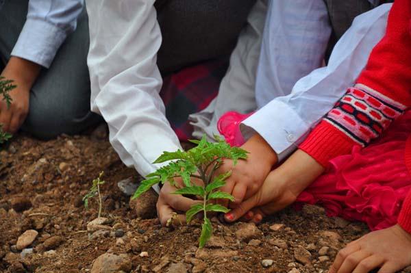 Kırıkkale'de öğrenciler başlattıkları proje kapsamında yaşlı, kimsesiz, engelli ve bakıma muhtaç kişiler için sebze ve meyve yetiştiriyor. ( Ahmet Kavaklı - Anadolu Ajansı )