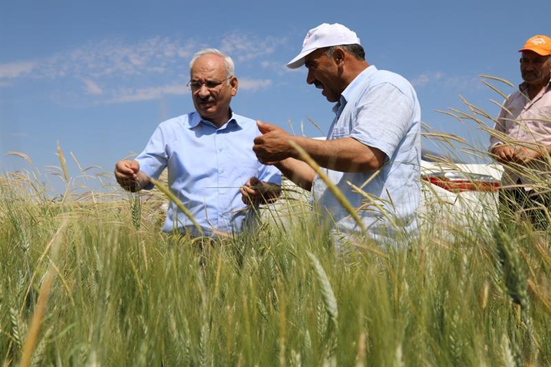 200 bin dekar tarım arazisi ilaçlanıyor 3 - 200 bin dekar tarım arazisi ilaçlanıyor
