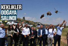 Photo of Keklikler Doğaya Salındı
