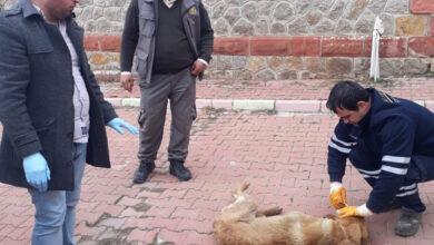 Photo of Yaralı Köpeğe Belediye Sahip Çıktı