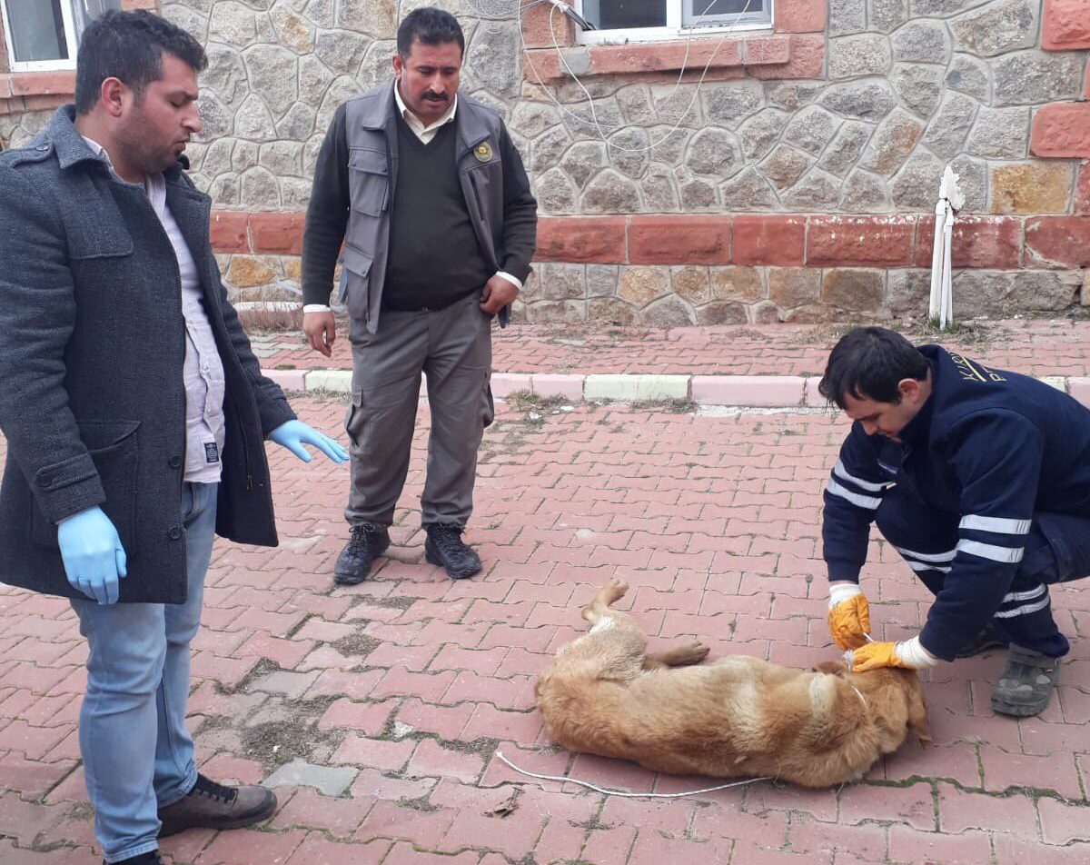 Yaralı Köpeğe Belediye Sahip Çıktı