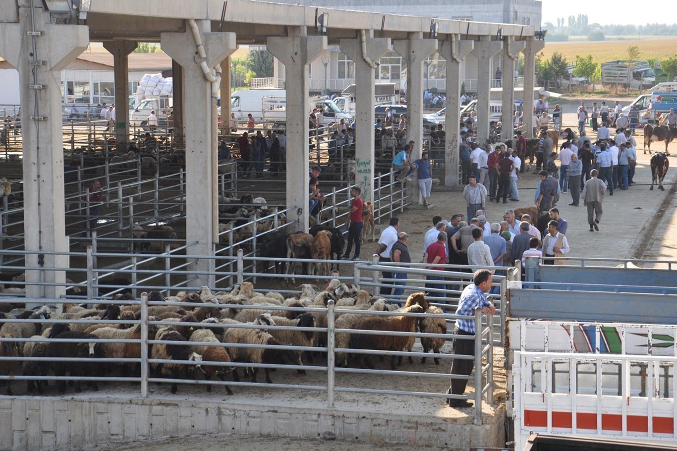 Hayvan pazarı kapatıldı 2 - Hayvan pazarı kapatıldı