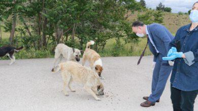 Photo of Başkan Saygılı, Sokak Hayvanlarına Yem Bıraktı