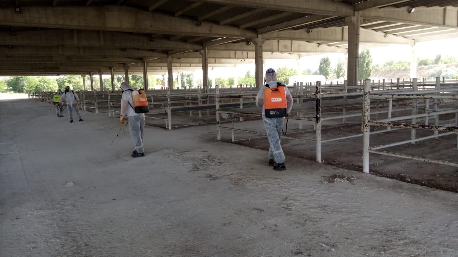 Kırıkkalede hayvan pazarı yeniden açılıyor - Kırıkkale'de hayvan pazarı yeniden açılıyor