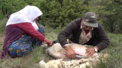 Photo of Kırıkkale'de Besicilerin Koyun Kırkma Telaşı