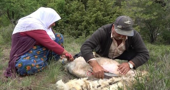Kırıkkale'de Besicilerin Koyun Kırkma Telaşı
