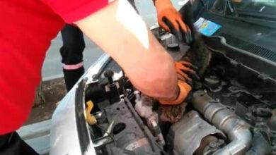 Photo of Otomobilin motorunda sıkışan yavru kedi kurtarıldı